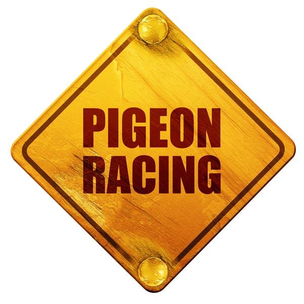 pigeon racing clubs